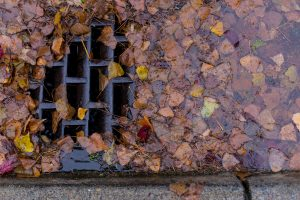 leaves blocking a storm drain