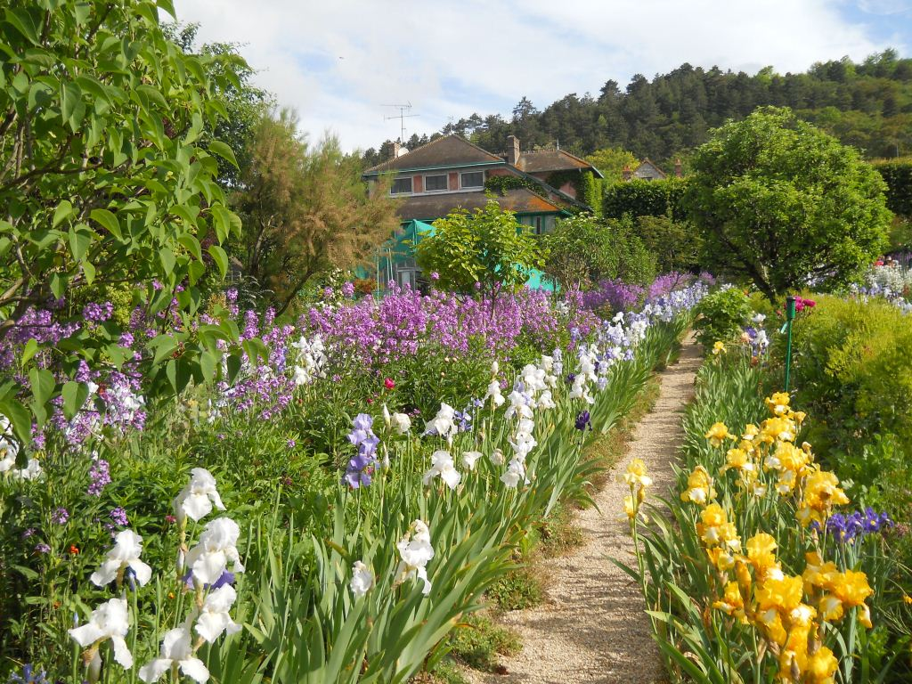 Rows of Iris in Monet's Garden, Giverny, France