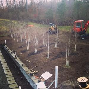 Neave birch grove