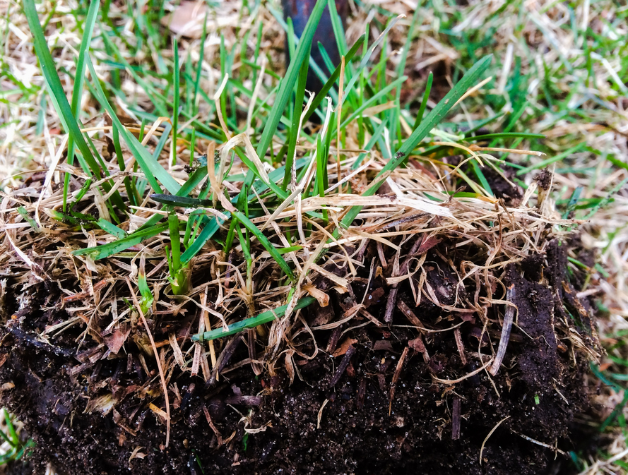 Do You Know When To Dethatch Your Lawn Neave Group