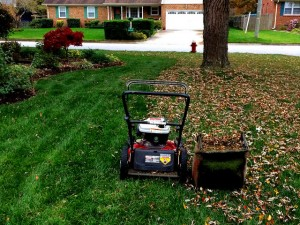 mowing leaves instead of raking improves lawn health care and increases lawns nitrogen